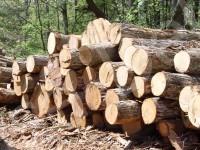 Лиственные породы древесины для производства мебели